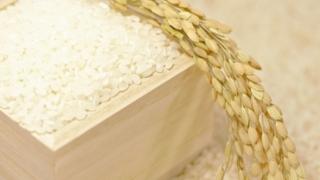 お米と稲の写真